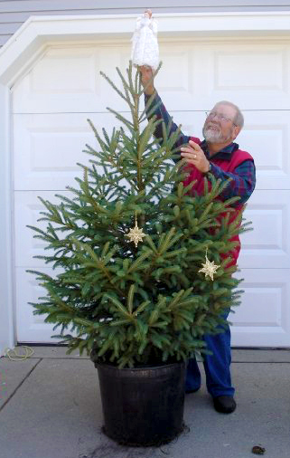 Enjoy a living Christmas tree for years to come